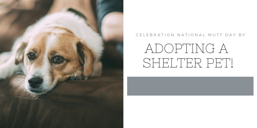 National Mutt Day (Dec 2nd) is a great opportunity to help out your local shelters here in San Antonio! The Holiday Season is a time where we try to be kind and help others less fortunate then us. It's also a time for gift giving. Instead of buying a pet from a breeder, adopt! If you can't adopt you can donate to any of these great organizations here in San Antonio.