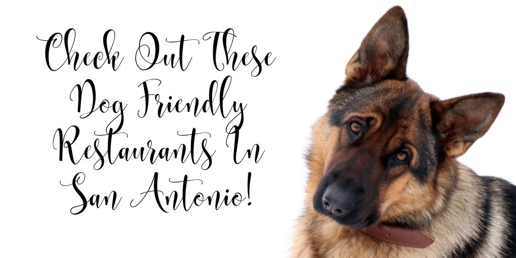 We love your four-legged family members and we're so happy San Antonio does too! Whether you're hungry after a day at the dog park or just want to get out and about with your pet, there are plenty of dog-friendly restaurants and bars in San Antonio to hang out with your paws out.